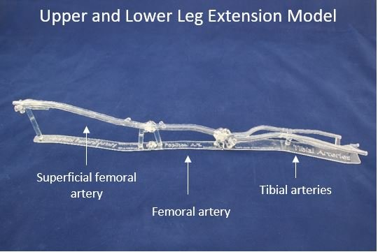 Upper and Lower Leg Extension Model