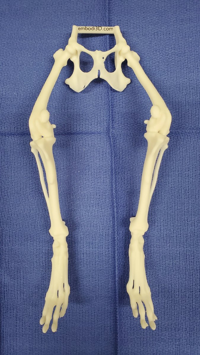 Canine pelvis and lower extremities with patellar subluxation