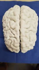 Brain in white PLA