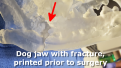 dog jaw fracture