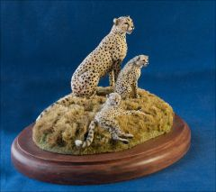 Cheetahs on African savanah by Elizabeth McInnis