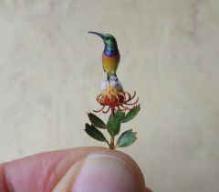Orange breasted Sunbird perched on a pincushion flower by Beth Freeman-Kane