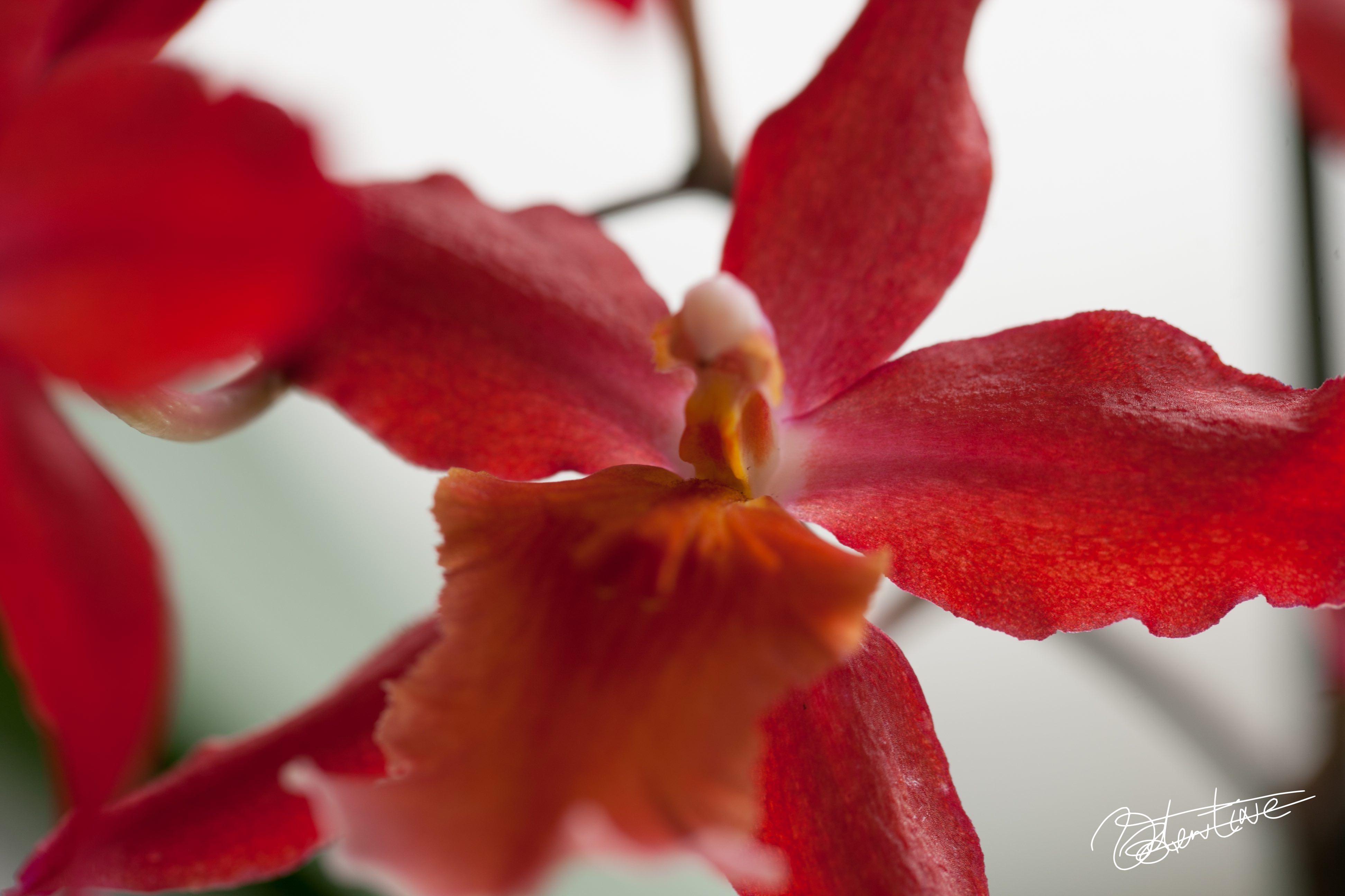 Comment S Occuper D Un Orchidée help ! novice en orchidées - questions / réponses - forums