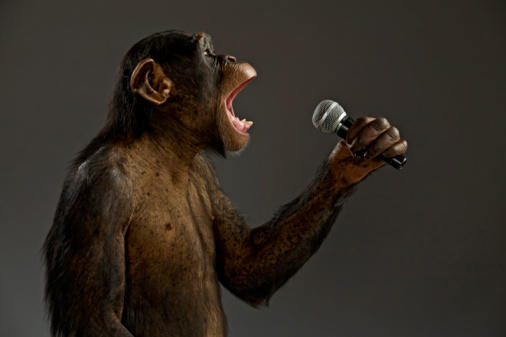 chimp vocalist.jpeg