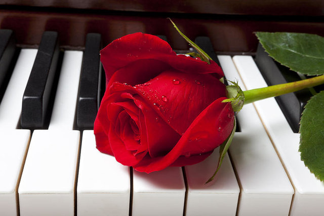 red-rose-on-piano-keys-garry-gay.thumb.jpg.6b045f2e3ade8023d0e17d00ac93a1a8.jpg