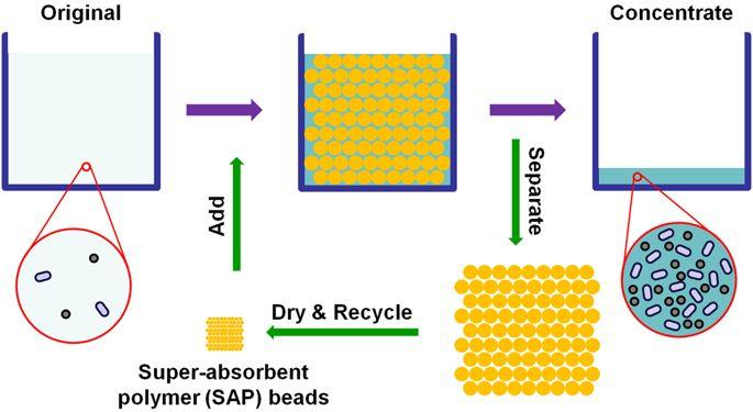 Ders super absorbent polymer absorb or adsorb water?