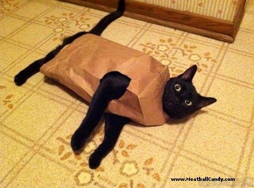 let-the-cat-out-of-the-bag-humor.jpeg