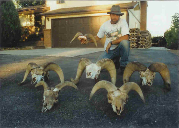 Sheep head pick-ups.jpg