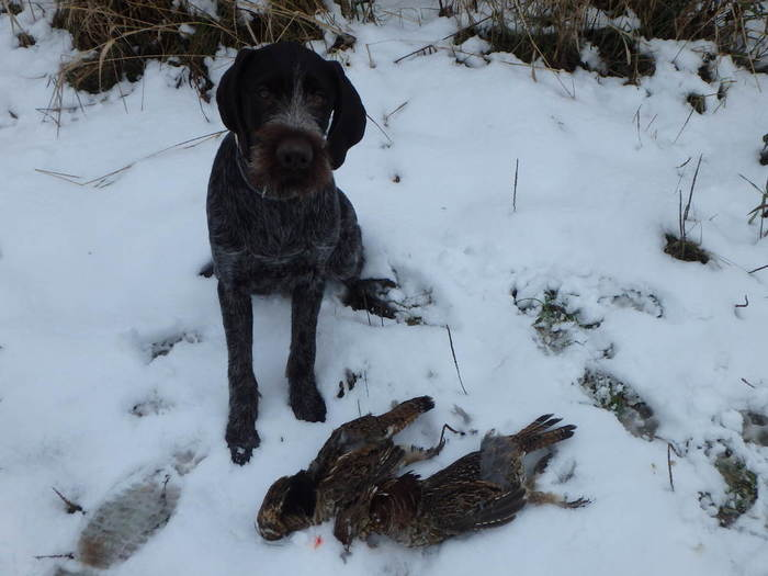 Cuut with grouse 11-17.JPG