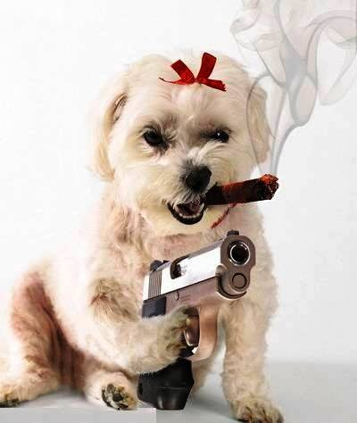 funny-dog-picture-mafia-dog.jpg