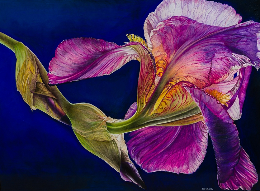Bearded Alcazar Iris #2 21 x 29 inches.jpg