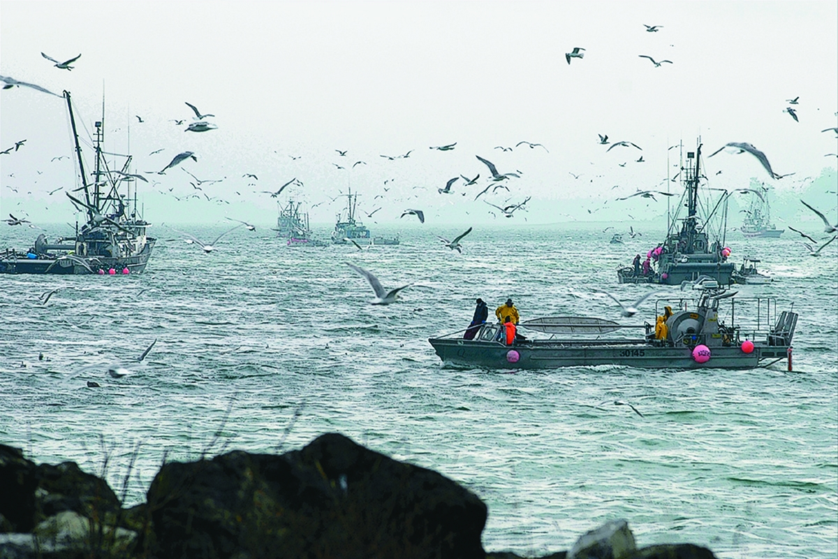 2019-03-06 The case for ending the herring fishery