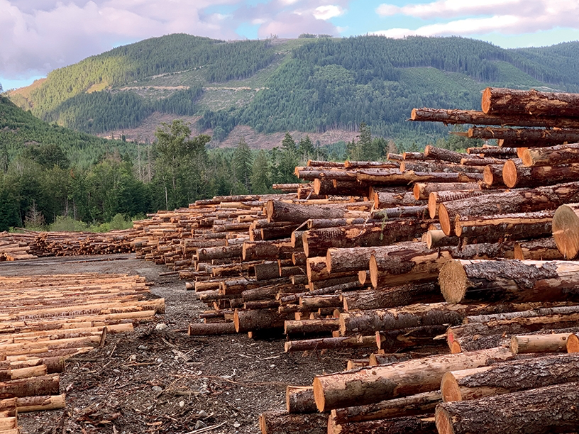 2019-09-01 The Cowichan River: loving and logging it to death