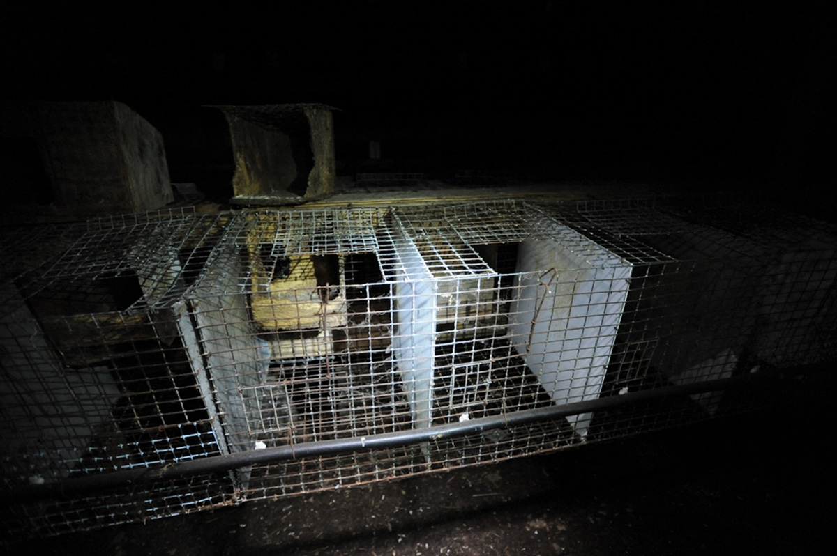 Wire cages used for mink farming. The Fur-Bearers website has video footage here (warning: disturbing for animals lovers). The Canada Mink Breeders Association websites features videos of model mink farms, but they all use small wire cages.