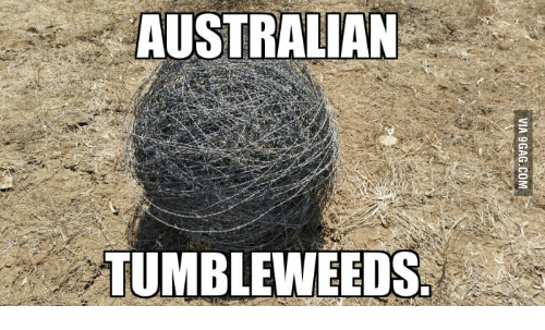 australian-tumble-weeds-17824421.png