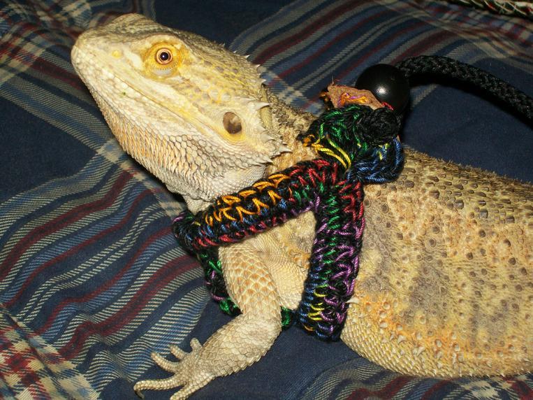 Yoshi's Lizard Leash - Pet Items - Crochetville