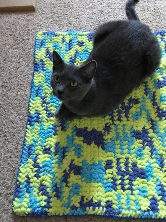 Bernat Blanket Yarn blue Cat blanket 1.jpeg