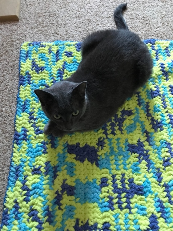 Bernat Blanket Yarn blue Cat blanket 2.jpeg