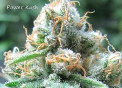 Power Kush Up Close