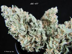 AK-47 Finished Product