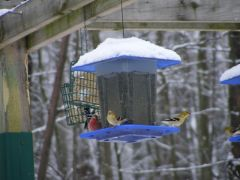 Finches 2013 02140054