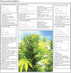 cannabinoid effects o'shaugnessy's
