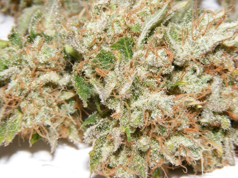 Dr. Atomic Blueberry Jam Strain Review