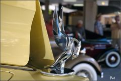 1935 Packard 1207 Convertible Coupe Roadster - yellow - radiator bird
