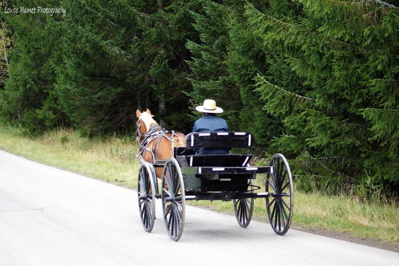 photo-amish-man.thumb.jpg.1ac53443b39e1cd6d5c831b06b41226a.jpg