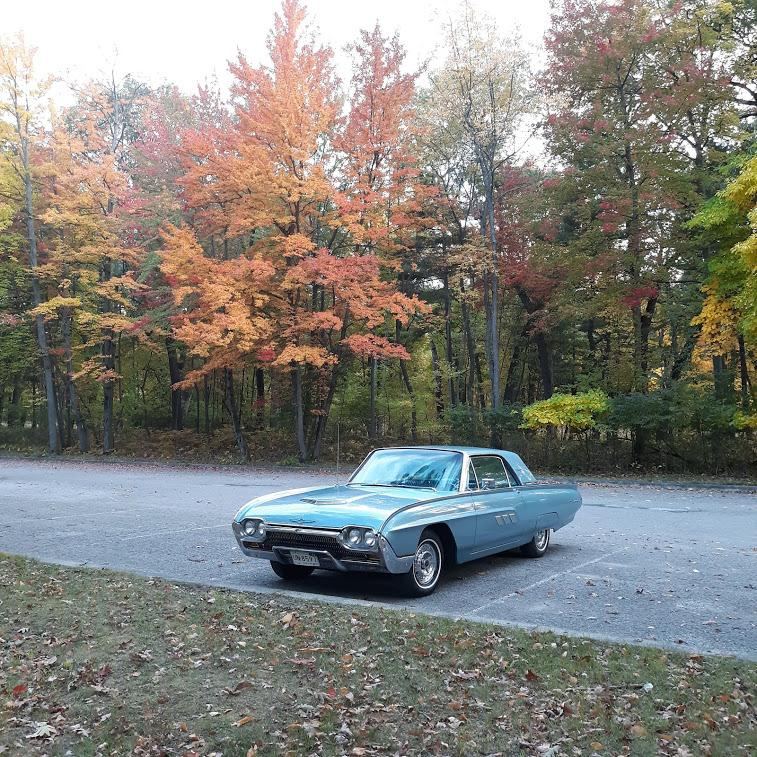 T-Bird Autumn.jpg