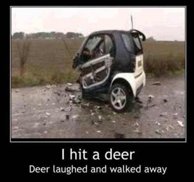 262127273-Funny-car-crash-I-hit-a-deer.png