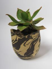 Marbled planter with aloe
