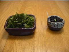 Bonsai pots in use