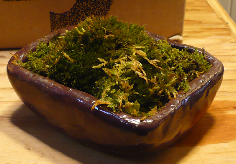 Red iron oxide w water glaze moss pot1.png