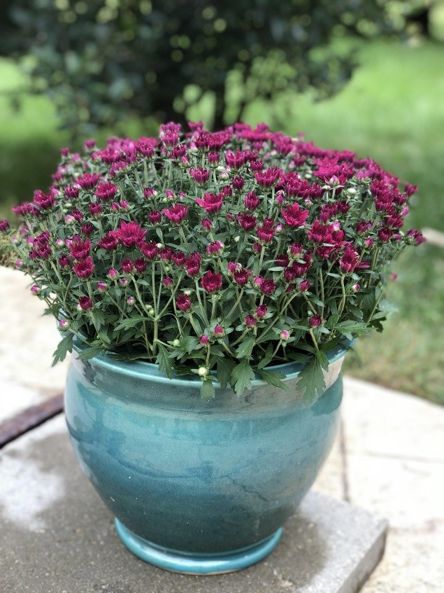 Turquoise Planter_small.jpg