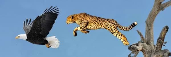 The Eagle and the Leopard
