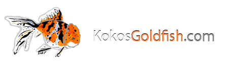 Kokos Goldfish Forum