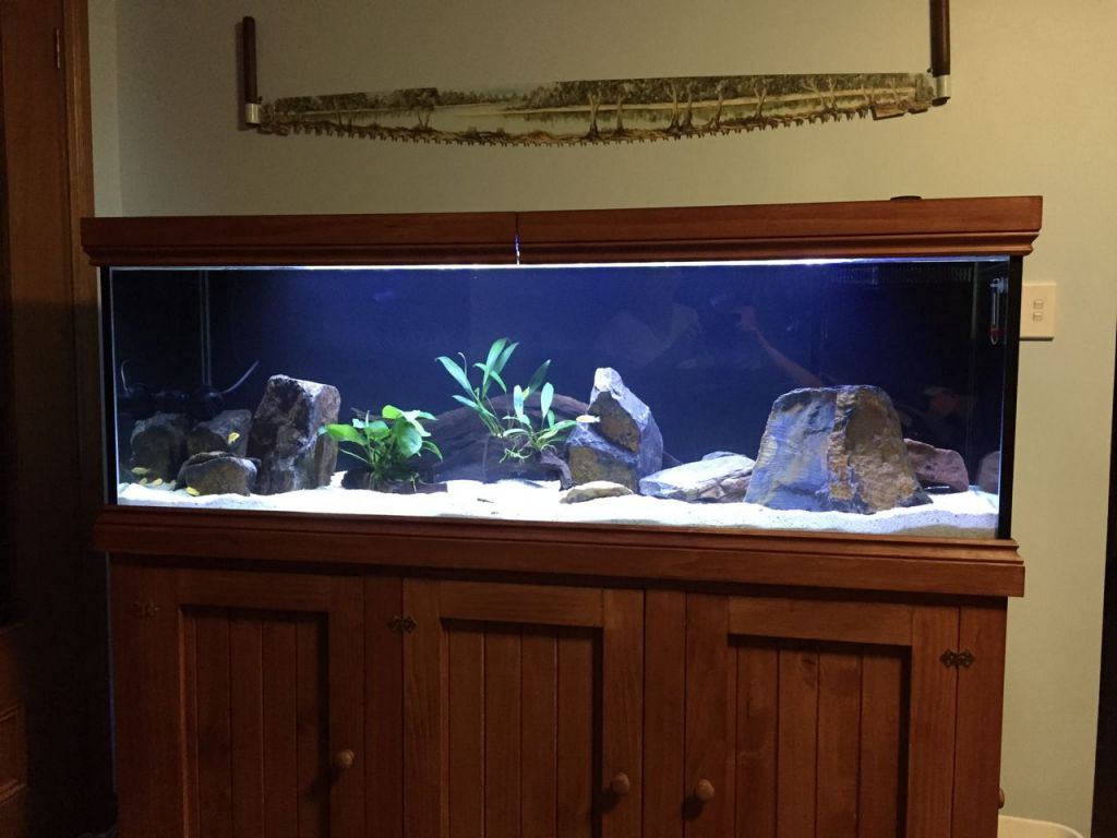 Show Tank using new LED
