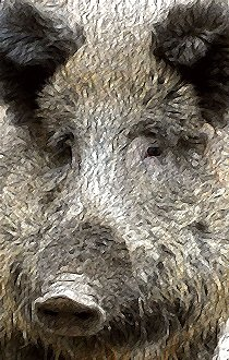 oBoar2 (Tan wild boar in profile)