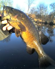 Winter smallies from the West Branch
