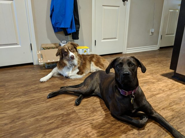 Buddy and Kaldi, two cute dogs!